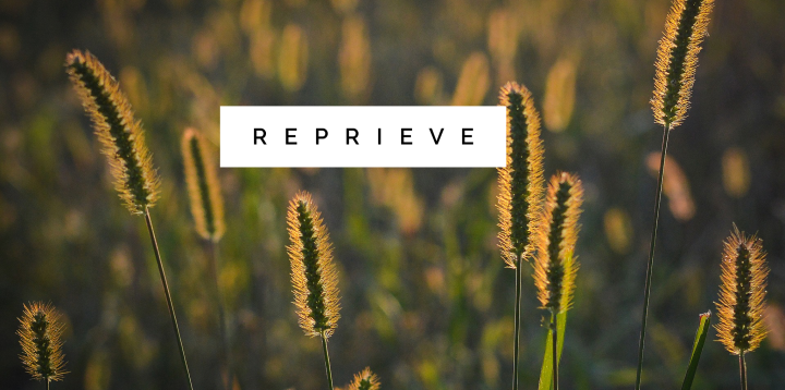 Daily Prompt: Reprieve