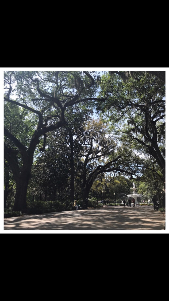 Travel Blog: Snapshot of Savannah, Georgia
